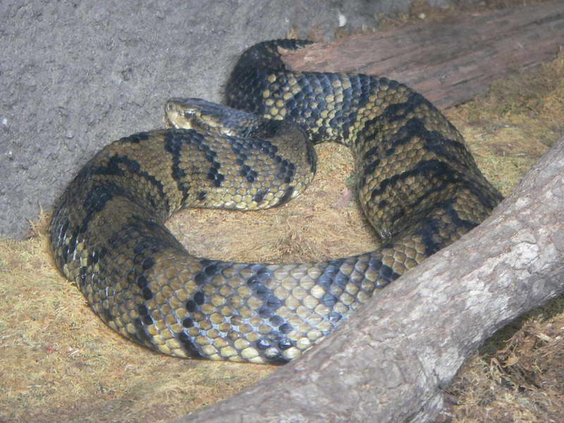 Freshwater Aquarium Snakes : Fresh Water Snakes Turtles And Wildlife Pictures