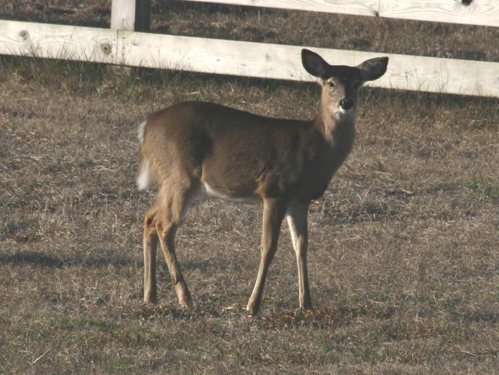 Carolina Animals
